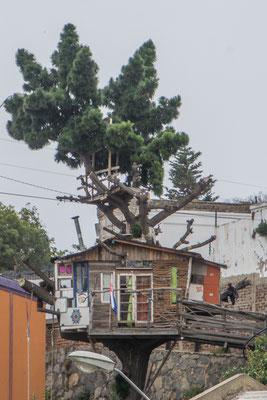 Das wohl einzige Baumhaus der Stadt