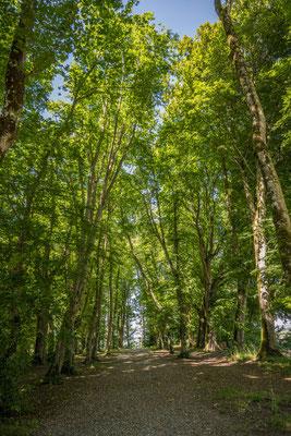 Waldkathedrale bei Beromünster