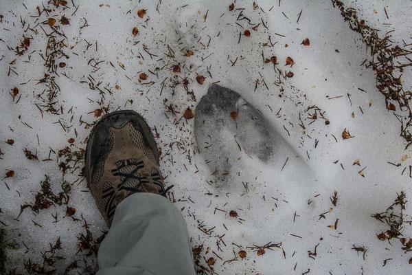Der Elch hat die selbe Schuhgrösse wie Ueli
