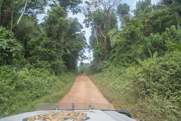 Dschungelpiste