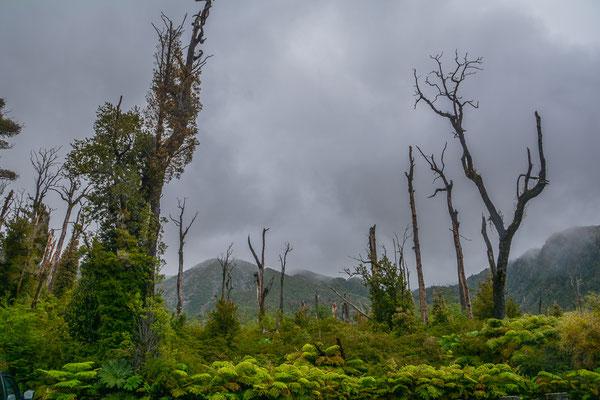 Unterhalb des Vulkans Chaiten, Spuren seiner Verwüstungen