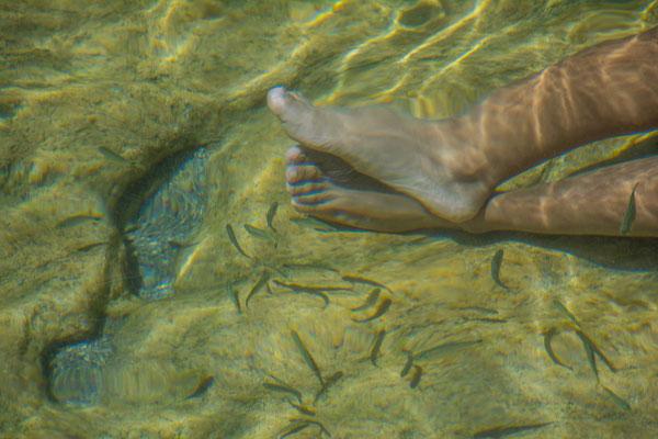 Gefrässige Fische knabbern an den Haaren, Semuc Champey