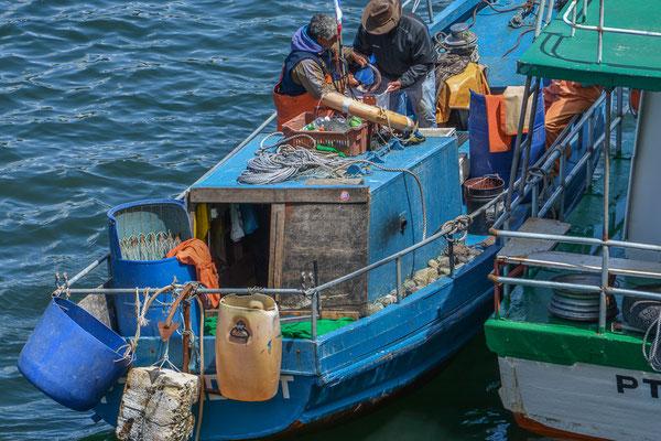So kauft man wirklich frischen Fisch