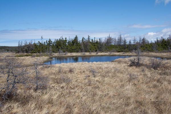 The Bog, Sumpflandschaft auf dem Hochplateau des Cap Breton NP