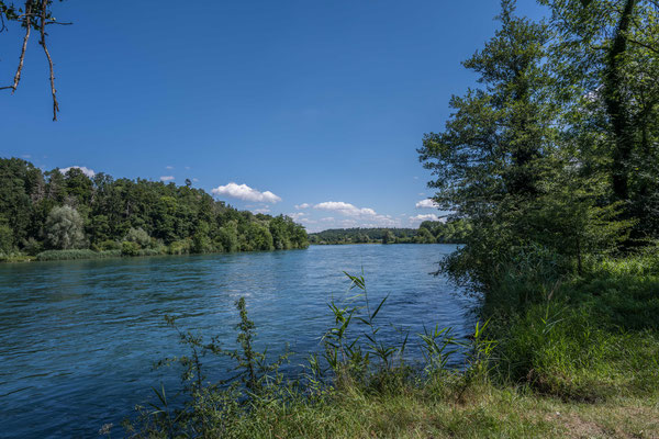 Rhein an den Thurauen