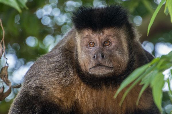 Wildlebender Affe beim Besucherzentrum