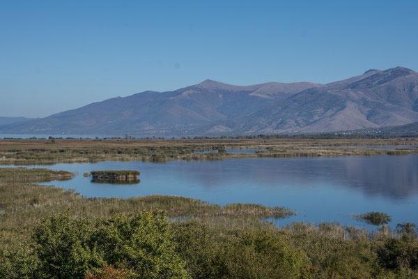 Der Schilfgürtel am kleinen Prespa See