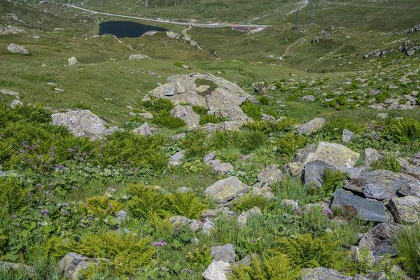 Wanderung zu den Bergseen im Gotthard Gebiet, Abstieg zu den Autos querfeldein
