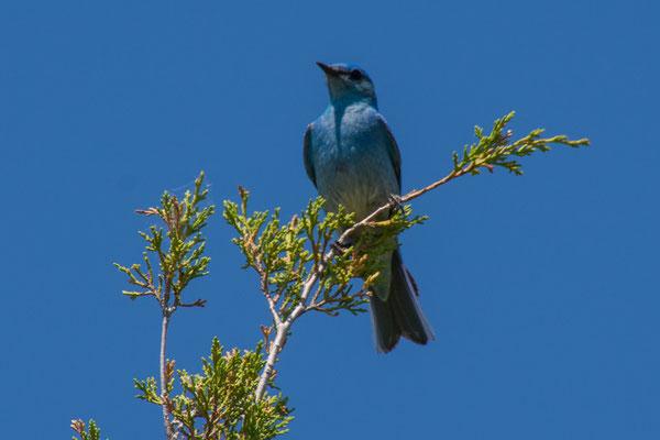 Ein Paradies auch für Vögel