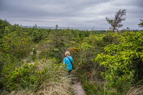 Wanderung im Thy National Park, Stenbjerg Landingsplads