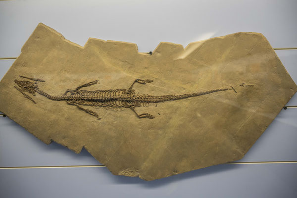 Fossilienmuseum in Meride