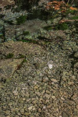 Kristallklares Wasser, ein der vielen Quellen im Tal