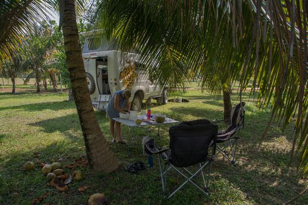 Camping im Kokospalmenwald