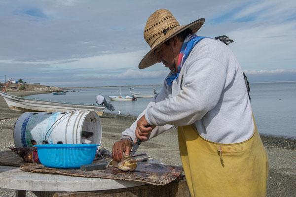 Fischer bei der Arbeit, Magdalena