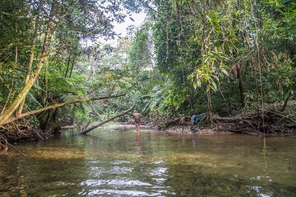 Unser Pool im Dschungel