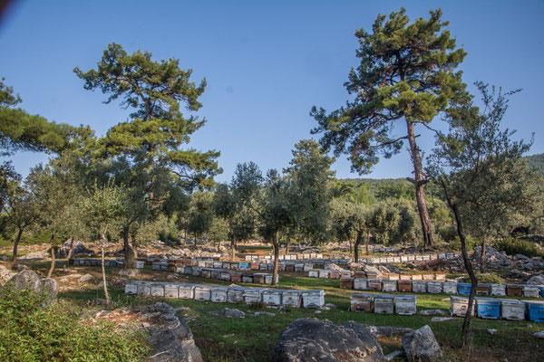 Unzählige Bienenfarmen in den Wäldern