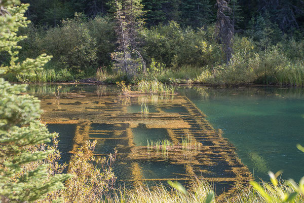 Überreste eines Schwimmbaggers, Whiskey Flats Campground