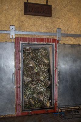 In diesen Öfen werden die geviertelten Agaven gekocht
