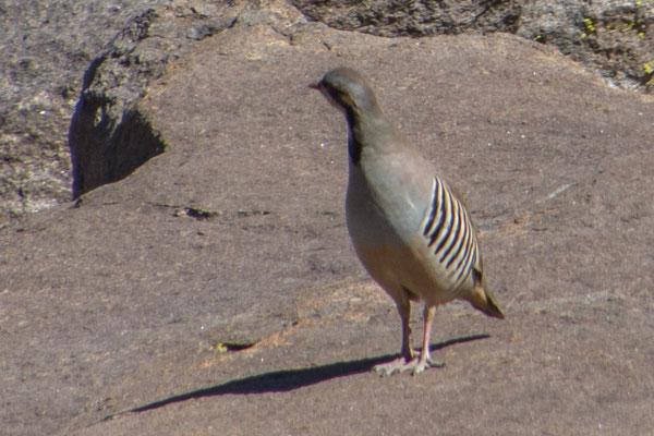 Mysteriöser Vogel, unbekannt...