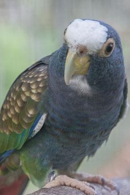 Unsere Nachbarn die Papageien