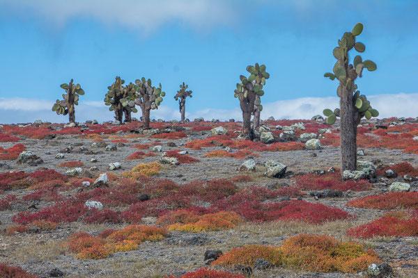 Die roten Korallenbüsche, Wahrzeichen der Insel und Kaktusbäume