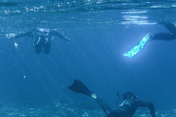 Was für ein Erlebnis mit Seelöwen zu schwimmen...