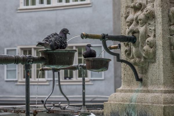 Vogelbad am Brunnen