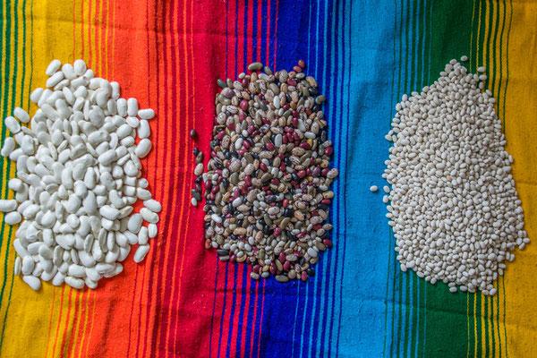 Vielfalt an Bohnen