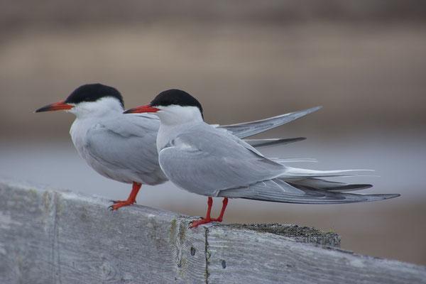 Die Vögel trotzen dem Wind