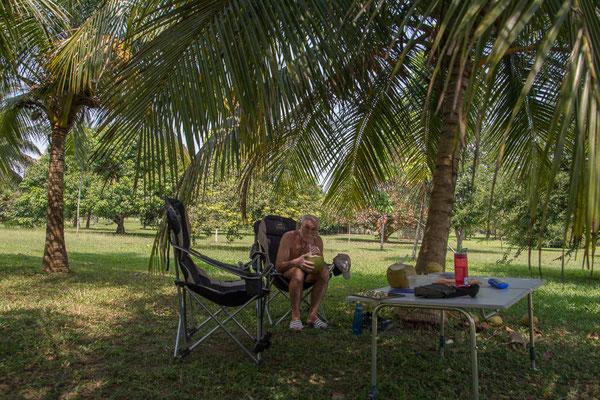 Kokusmilch schlürfen unter Palmen