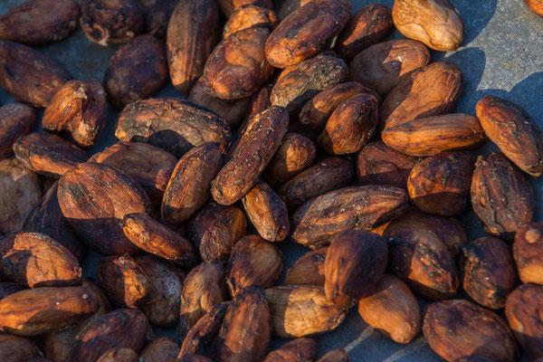 Die Kakaobohnen werden getrocknet