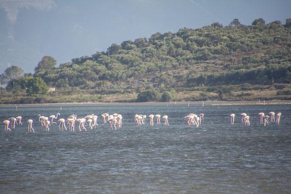 Flamingos an der Nartes Lagune