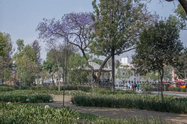Im Alameda Park
