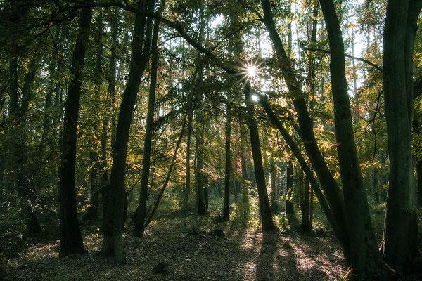 Der Wald  (1) - © Helga Jaramillo Arenas - Fotografie und Poesie / Oktober 2018