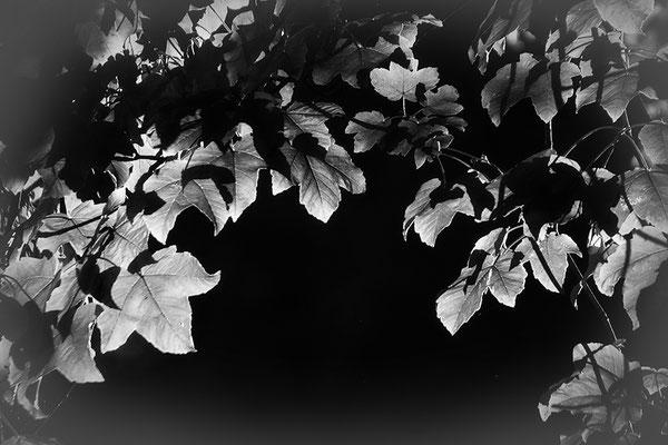 Blätterreigen -  © Helga Jaramillo Arenas - Fotografie und Poesie / Februar 2021