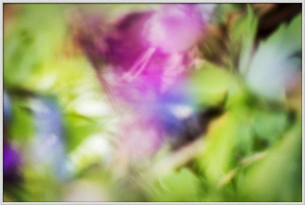 Das Wesen der Pflanzen (1) - © Helga Jaramillo Arenas - Fotografie und Poesie / April 2019