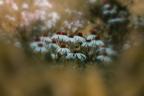 Das Glück in der Wiese - © Helga Jaramillo Arenas - Fotografie und Poesie / August 2017