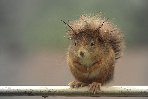 Regenhörnchen - © Helga Jaramillo Arenas - Fotografie und Poesie / Januar 2016