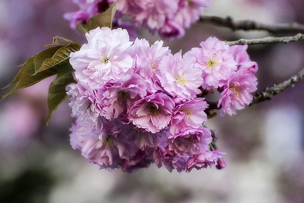 Frühlingssehnsucht - © Helga Jaramillo Arenas - Fotografie und Poesie / Dezember 2019