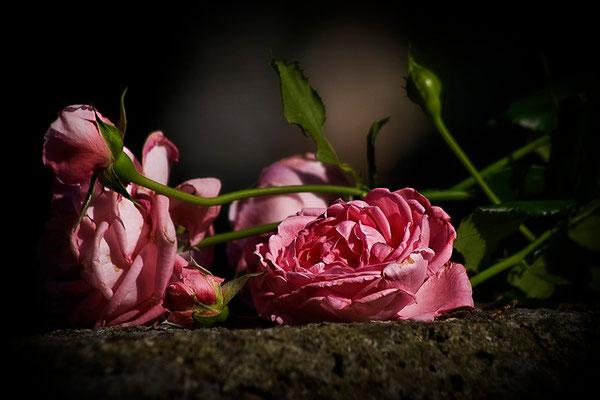 Traurige Rosen - © Helga Jaramillo Arenas - Fotografie und Poesie / August 2012