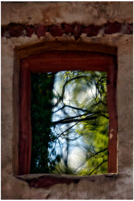 Entschwundener Wald - © Helga Jaramillo Arenas - Fotografie und Poesie / April 2015
