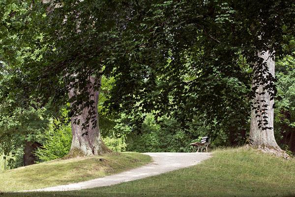 Im Glück der Bäume - © Helga Jaramillo Arenas - Fotografie und Poesie / Juli 2015