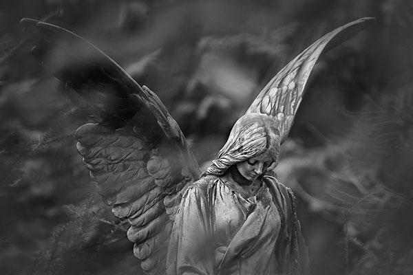 Mit mächtigen Schwingen - © Helga Jaramillo Arenas - Fotografie und Poesie / Mai 2015