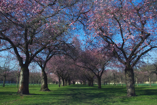 Frühlingsfreude - © Helga Jaramillo Arenas - Fotografie und Poesie / April 2015