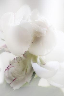 Träume bleiben -  © Helga Jaramillo Arenas - Fotografie und Poesie / Juli 2021