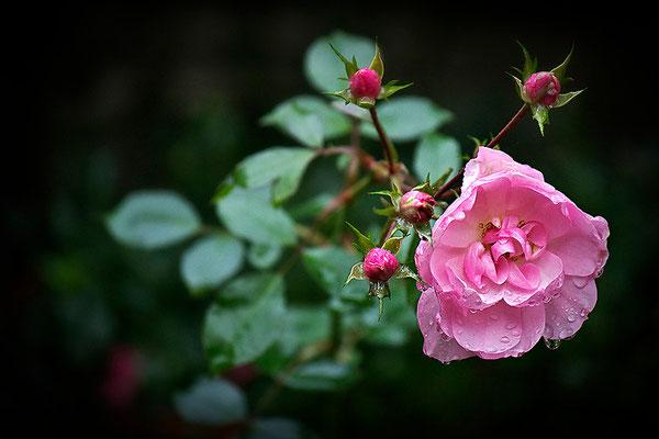 Dem Regen hingegeben - © Helga Jaramillo Arenas - Fotografie und Poesie / November 2013