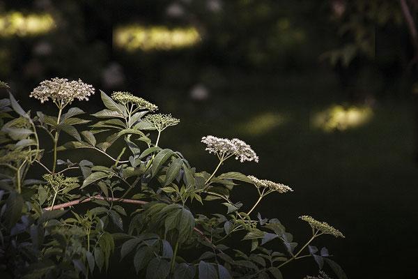 Ins Licht getaucht - © Helga Jaramillo Arenas - Fotografie und Poesie / Juli 2018