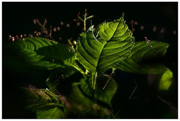 Im Fluss des Lichtes - © Helga Jaramillo Arenas - Fotografie und Poesie / September 2012