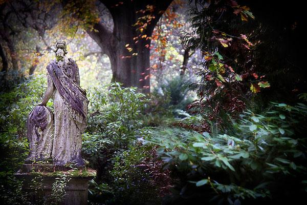 Begleiter auf allen Wegen - © Helga Jaramillo Arenas - Fotografie und Poesie / November 2013