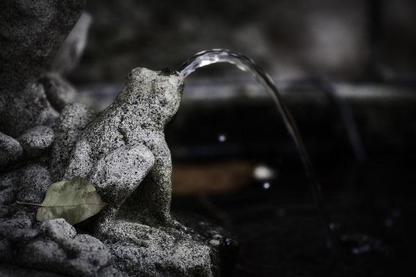 Geschichten vom Frosch - © Helga Jaramillo Arenas - Fotografie und Poesie / Januar 2017